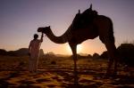 Sunset Camel. Wadi Rum, Jordan